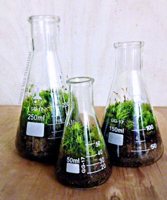 Cet ensemble de terrarium chimie unique est laccent parfait pour un décor chic ...