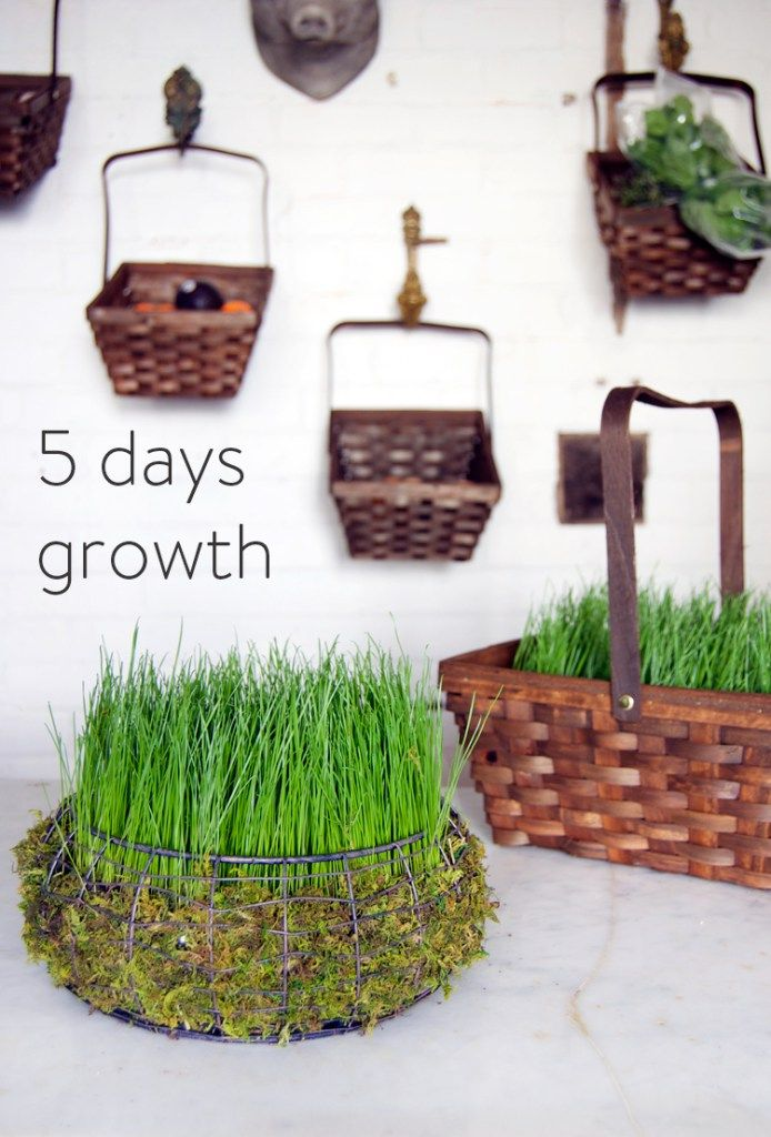 It only takes 5 days to grow an Easter basket filled with real grass!